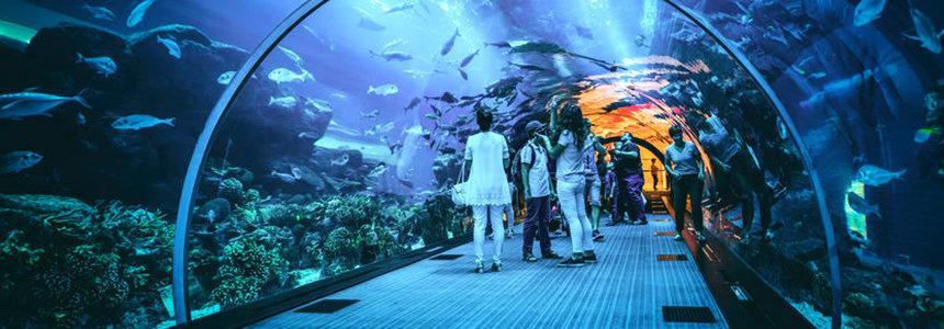 Dubain akvaario